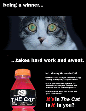 The-Cat-Drink.png