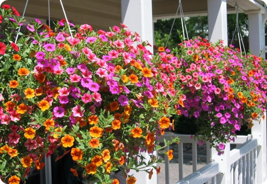 yourneighborhoodtreeservice.com hanging_baskets
