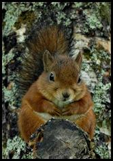 Als een eekhoorn door de toppen van de bomen.