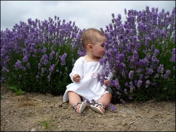 Lavender smells good!!!