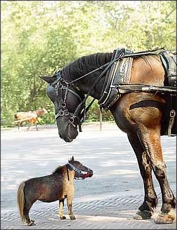 paard en Falabella