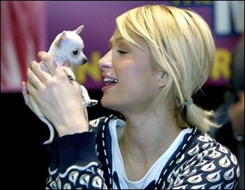 "Paris Hilton holds ""Diamond,"" a Chihuahua"