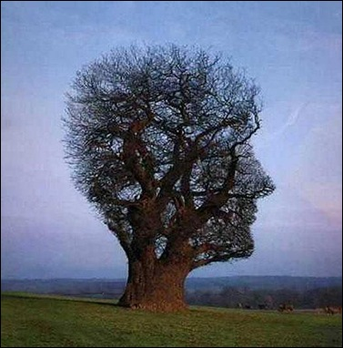 tree_illusion