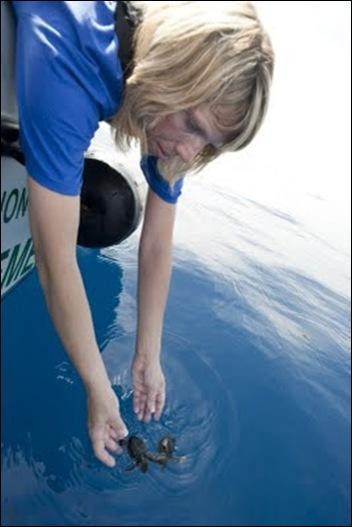 SeaWorld releases loggerhead hatchlings 52