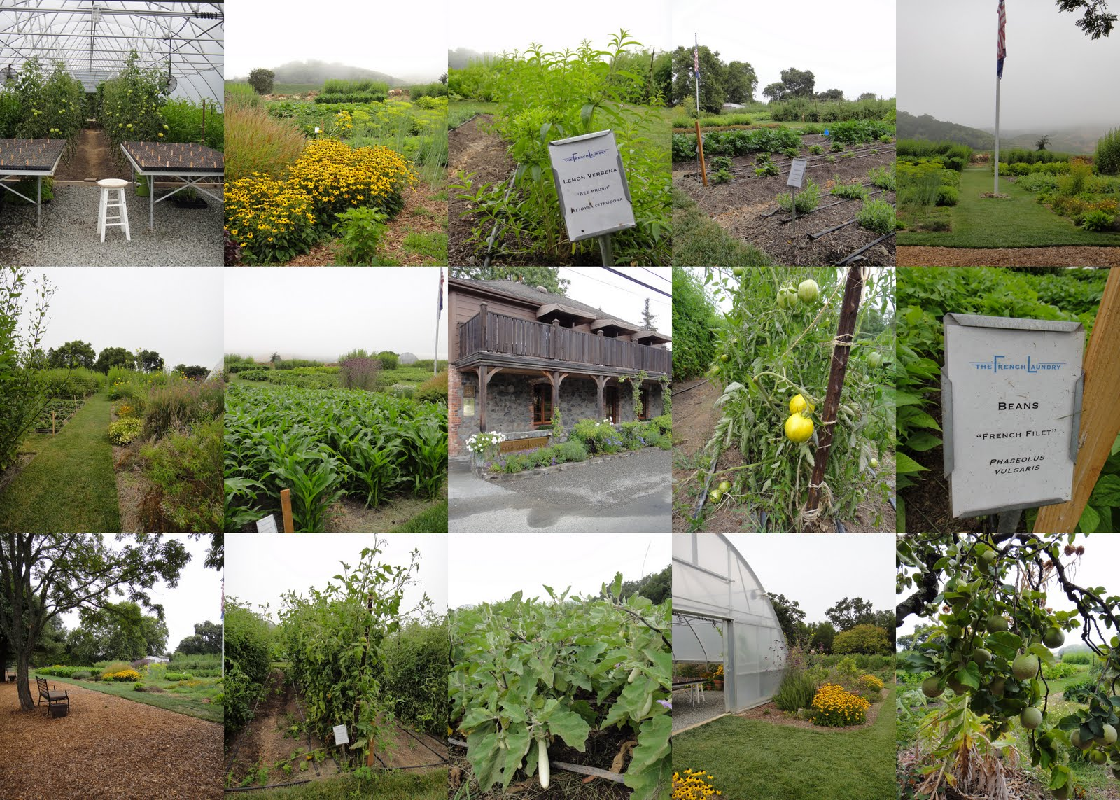 Country vegetable gardens - One Winery Garden We Didn T Make It To But I Want To On A Next Visit Is Quivira Located On West Dry Creek Road This Organic Winery Has A Large
