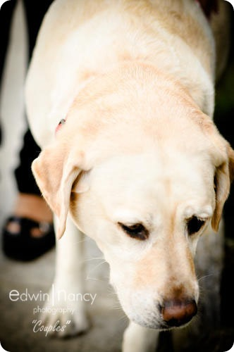 Santa_Monica_Pet_Photography