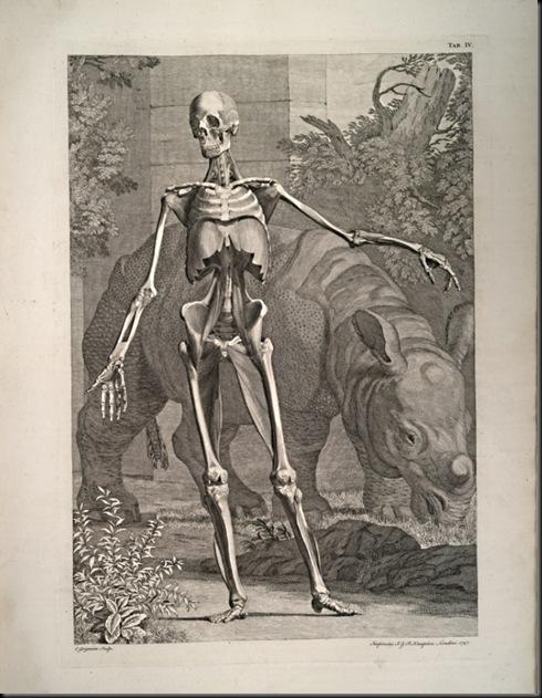 Bernhard_Siegfried_Albinus_Tablas_del_esqueleto_y_músculos_del_ cuerpo_humano