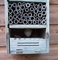 Insect house with tiny wasp nest in the basement