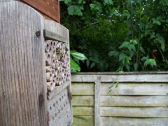 Leaf-cutter bees - Autumn return