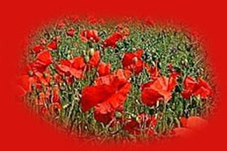 Poppies of the Great War - The War of all Wars - WW1