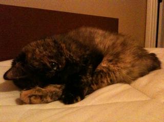 Sleepy kitten.