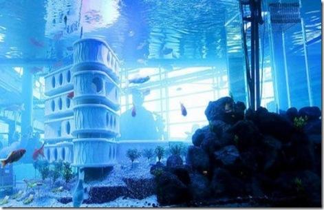 goldfish-hotel.1