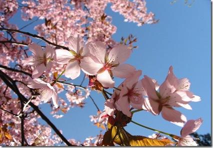 primavara-flori