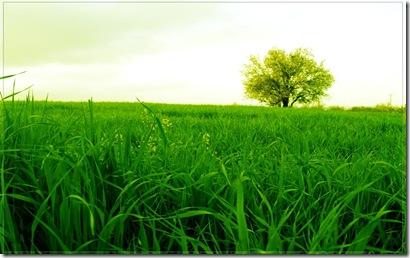 iarba verde de acasa