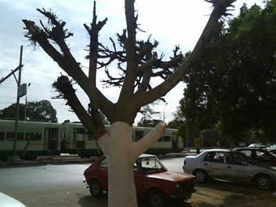 استمرار مذابح الأشجار