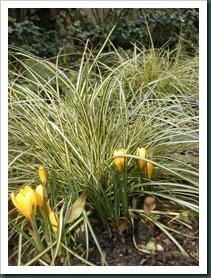 Garden 24 Feb 2010 014