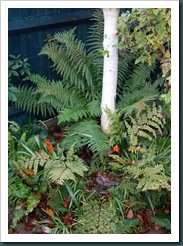 Garden 9 December 2009 012