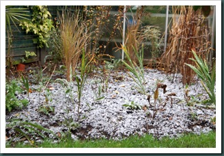 Snow 16 Dec 2009 004