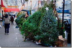urban christmas tree lot