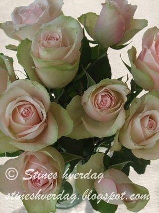 En bukett med roser