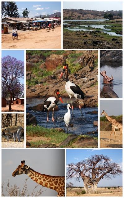 Ville dyr i Ruaha Nasjonalpark