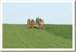 amish workin field 09 #2