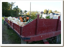 amish pumpkins $1 wagon