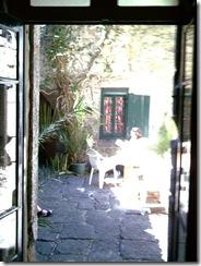 Agde courtyard