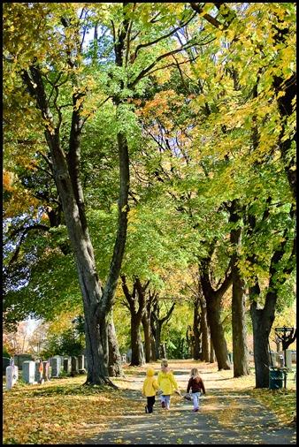 2009-11-03 Leaves 064