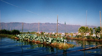 myanmar_inle_floating_veges