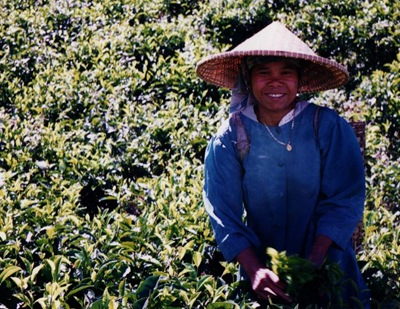 indonesia_puncak_pass_tea_picker