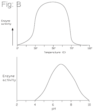 Temperature and pH effect