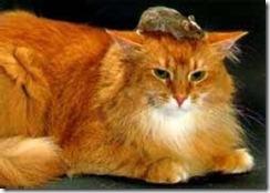 Katt08