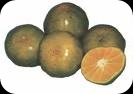 jeruk,buah jeruk,gambar