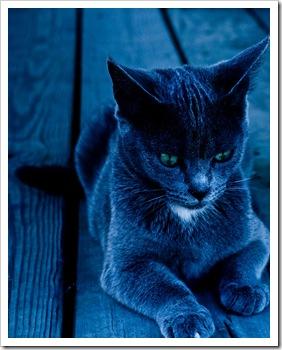 103 La importancia del gato en la meditacion. «