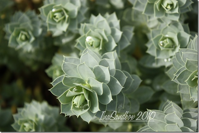 Donkey spurge 9-29 with logo