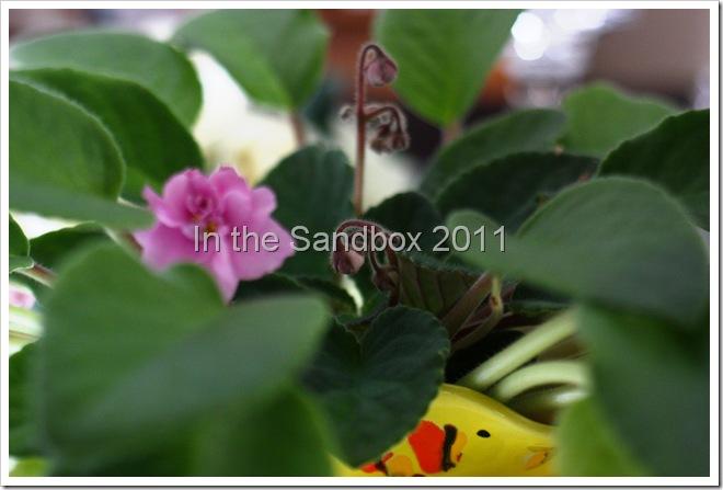 violet plant edited