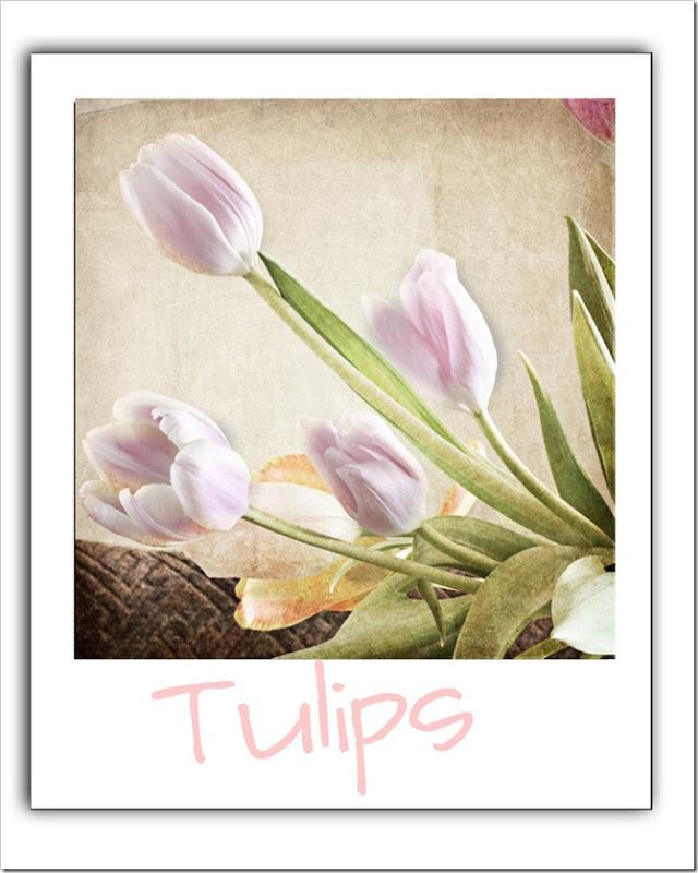 Tulips-in-polorod-LR