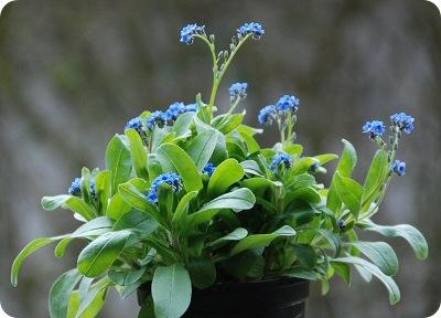 blomster01