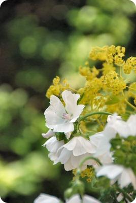 blomster04