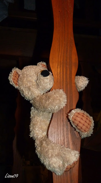 L'ours est sorti du grenier dans Actualité locale