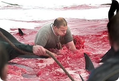 whale_hunting_06