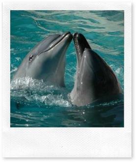 mead2_los-delfines-25417