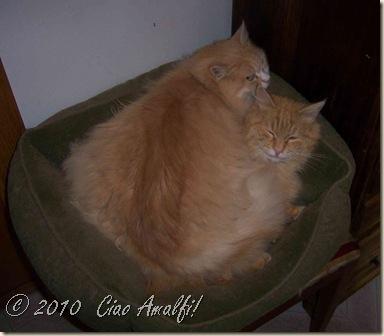 Ciao Amalfi Coast Blog two headed cat