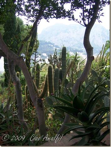 Ciao Amalfi Coast Blog Arco Naturale Cactus Garden