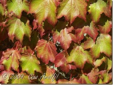 Ciao Amalfi Coast Blog Autumn Leaves