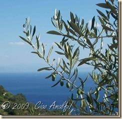 Ciao_Amalfi_Coast_Blog_olives_close_thumb[4]