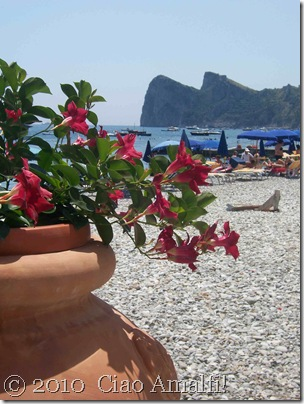Ciao Amalfi Coast Blog Nerano Flowers