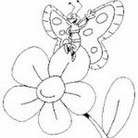 th_mariposa[1].jpg