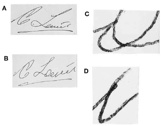(A) Genuine signature 'C. Lewis' and (B) slowly written freehand simulation of (A); (C) detail of the letter 'e' from the simulated signature exhibiting poor line quality; (D) detail of the letter 'w' from the simulated signature showing uncharacteristic pen lift.